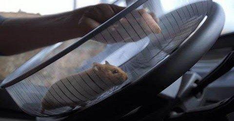 """""""The Hamster Stunt"""": Un hamster conduce un camión"""